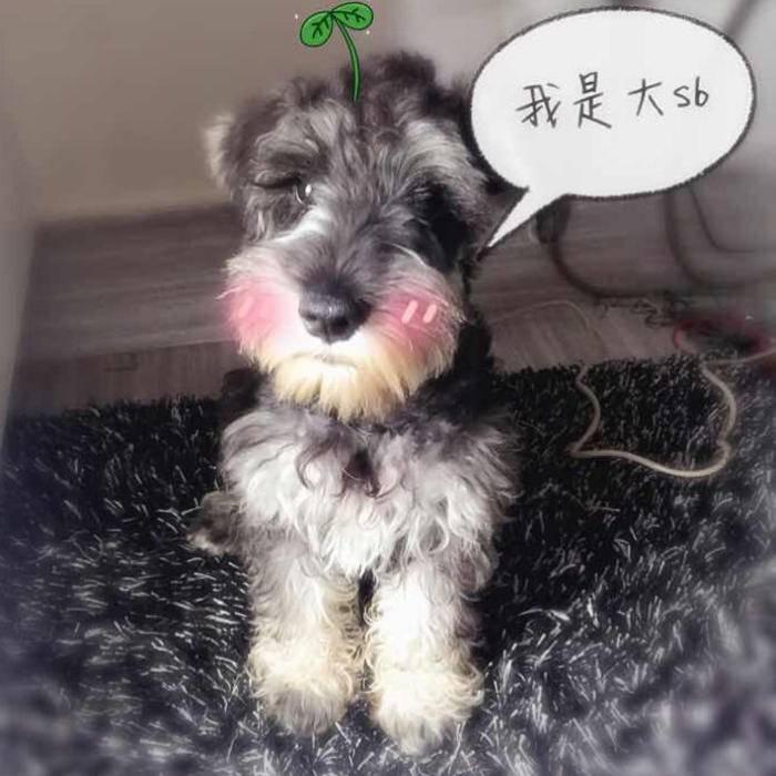 hey王晓晓晓青